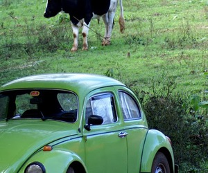 green, cow, and fusca image