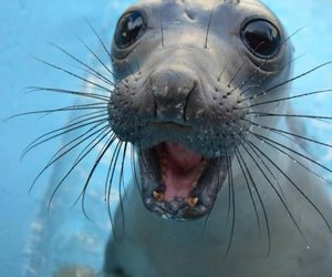 seal, cute, and funny cute image