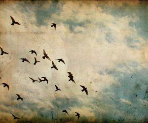 bird, sky, and freedom image