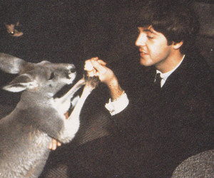 kangoroo image