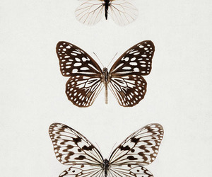butterfly, vintage, and black and white image