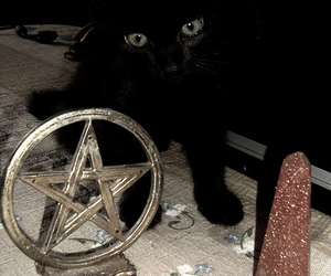 cat, pentagram, and black cat image