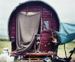 dog, gypsy, and hippie image