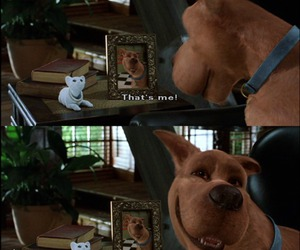 scooby doo, funny, and dog image