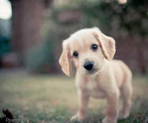 puppy, cute, and sweet image
