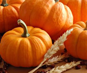 food, pumpkin, and fall image