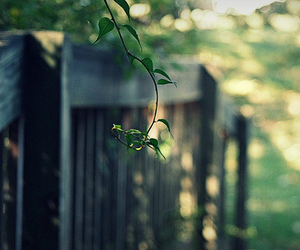 bokeh, nature, and green image