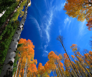 autumn, blue, and beauty image