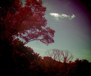 blue, indie, and lomography image
