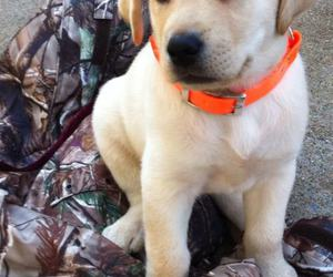 country, dog, and hunting image