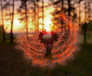 cool, dandelion, and photography image