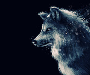 wolf, animal, and drawing image
