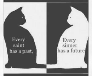 cat, quotes, and sinner image
