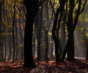 beautiful, forest, and light image