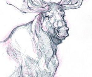 art, drawing, and moose image