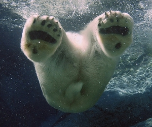 Polar Bear, bear, and water image