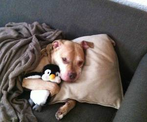 dog, cute, and penguin image