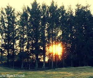 forrest, nature, and sun image
