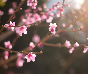 50mm, beautiful, and blossoms image