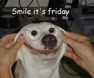 friday, smile, and dog image