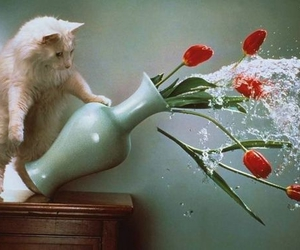 cat, mess, and flowers image