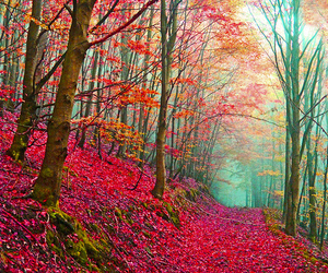 tree, forest, and pink image