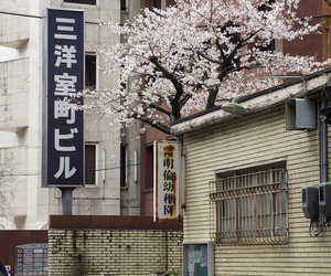 japan, street, and sakura image