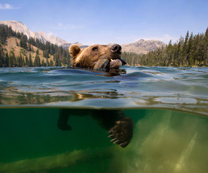 bear and water image