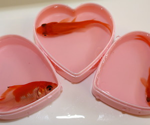 fish, heart, and pink image