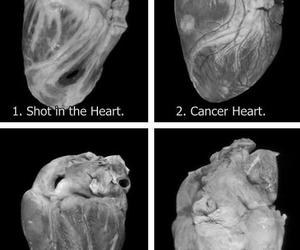 black and white, dead, and heart image