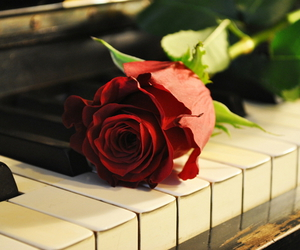 rose, piano, and music image