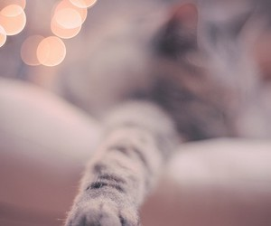 cat, simple, and pet image