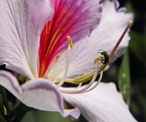 flor, flower, and nature image