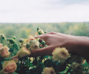 delicated, flowers, and hand image