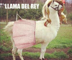 lana del rey, funny, and llama image