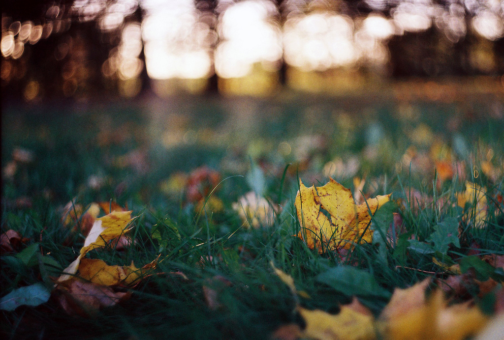 autumn, brown, and grass image