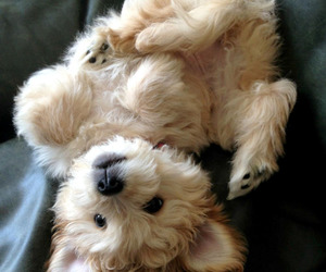 adorable, cutest, and dog image