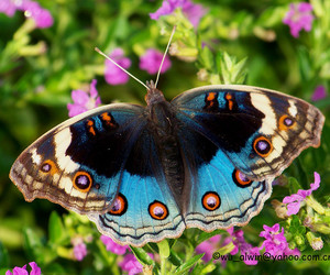 butterfly, china, and insect image