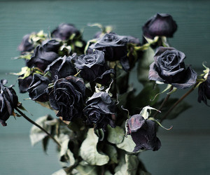 dead, roses, and black image