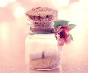 flower, lindo, and sweet photo image