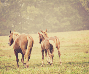 country, horse, and horses image
