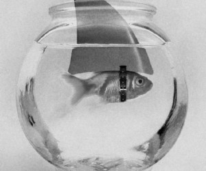 fish, shark, and black and white image
