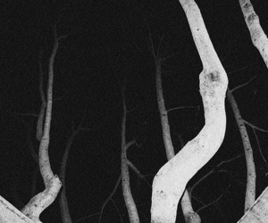 night, woods, and black and white image