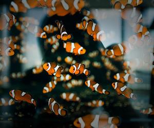 fish, nemo, and animal image