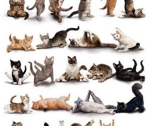 animal, cat, and crazy image