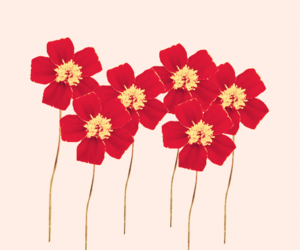 flower, red, and vintage image