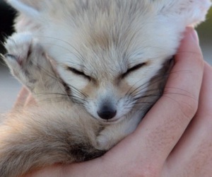 adorable, camera, and fox image
