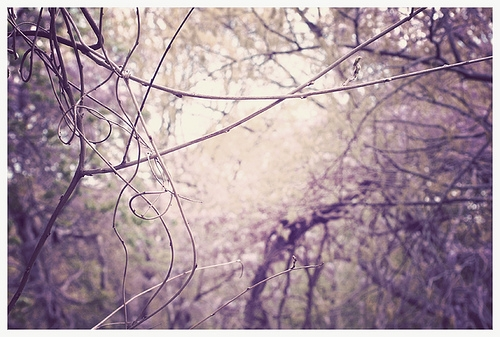 nature, purple, and trees image