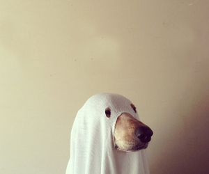 dog, ghost, and Halloween image