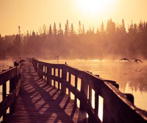 bird, lake, and morning image